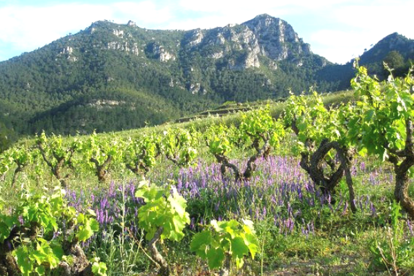 The stunning vineyards in Priorat. Interview the Winemaker Joan Ignasi Domènech Vinyes Domenech